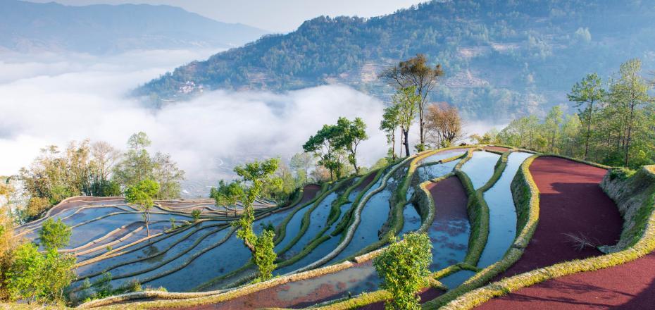 Yuanyang Terraces