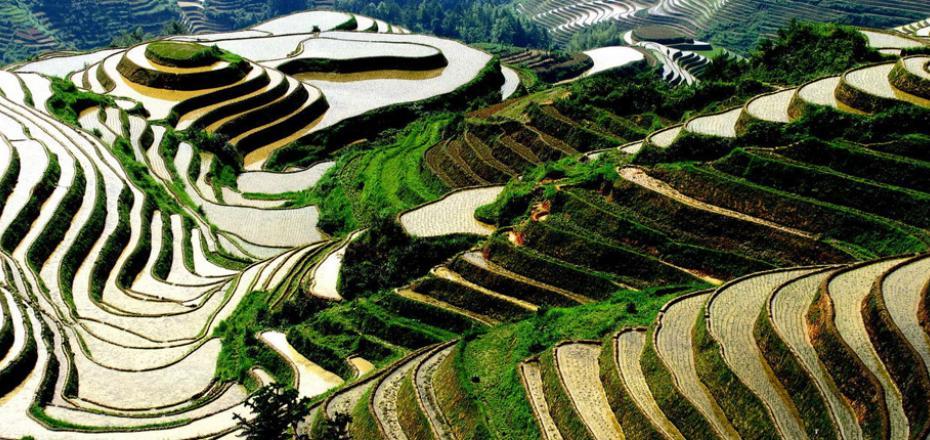 Terrazze di riso di Yuanyang